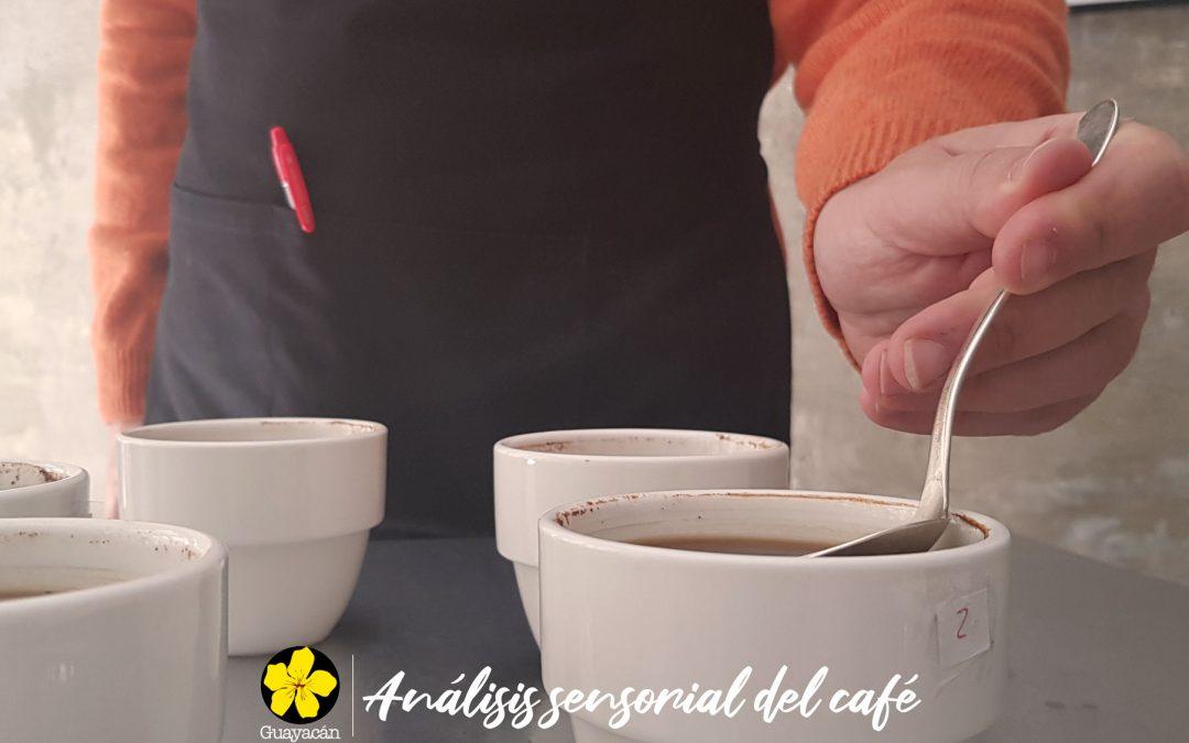 CURSOS PROFESIONALES: ANÁLISIS SENSORIAL DEL CAFÉ